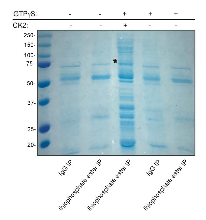 Identification of Novel CK2 Kinase Substrates Using a Versatile