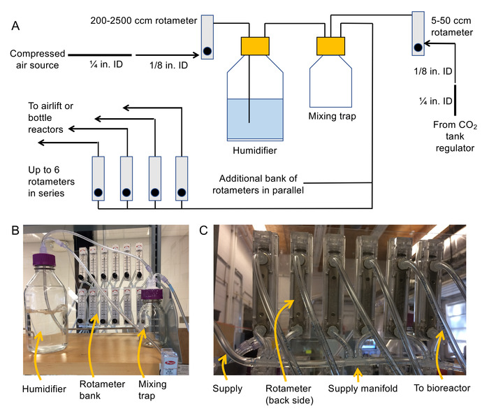 Cultivation of Green Microalgae in Bubble Column