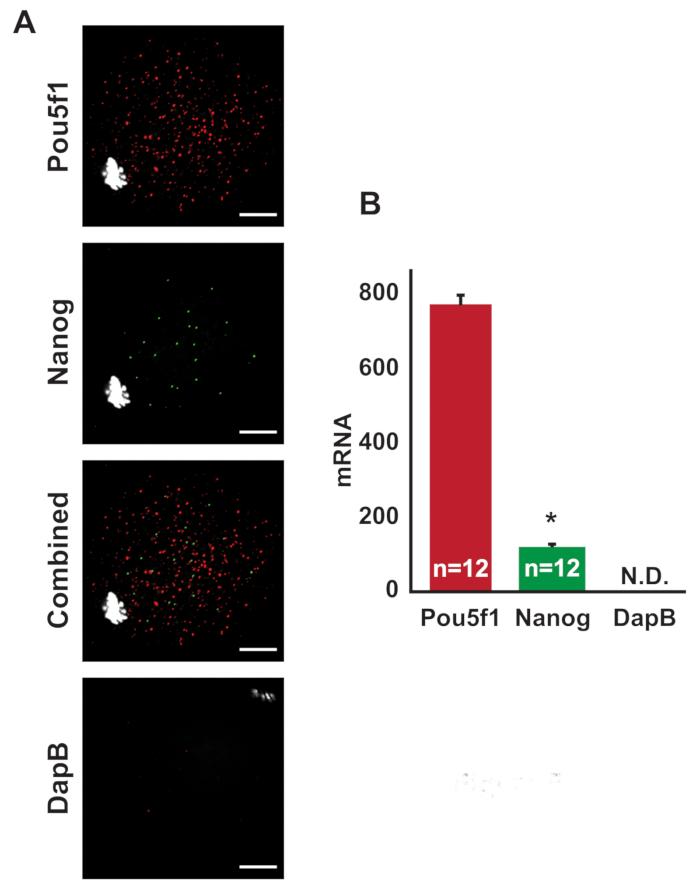 Use of Single Molecule Fluorescent In Situ Hybridization (SM