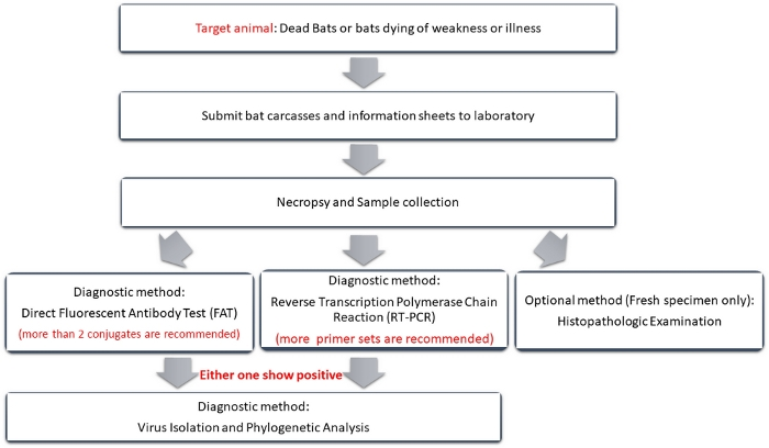 Standard Operating Procedure For Lyssavirus Surveillance Of