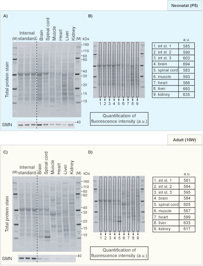 Robust Comparison of Protein Levels Across Tissues and