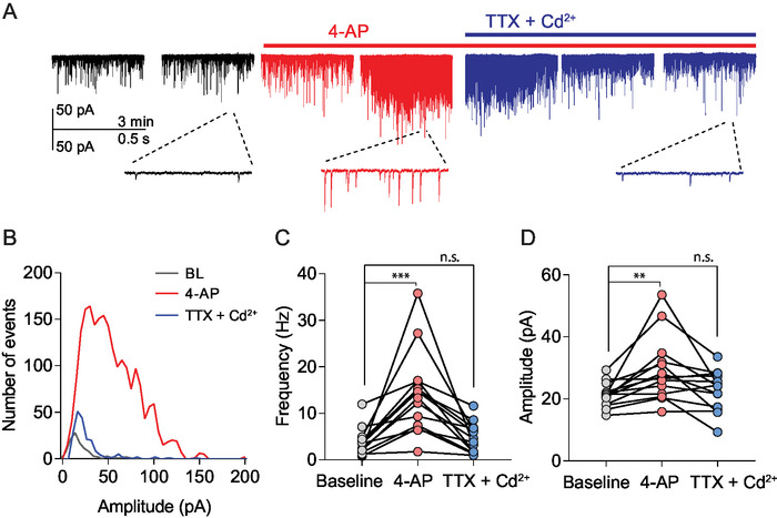 Evaluation of Synaptic Multiplicity Using Whole-cell Patch