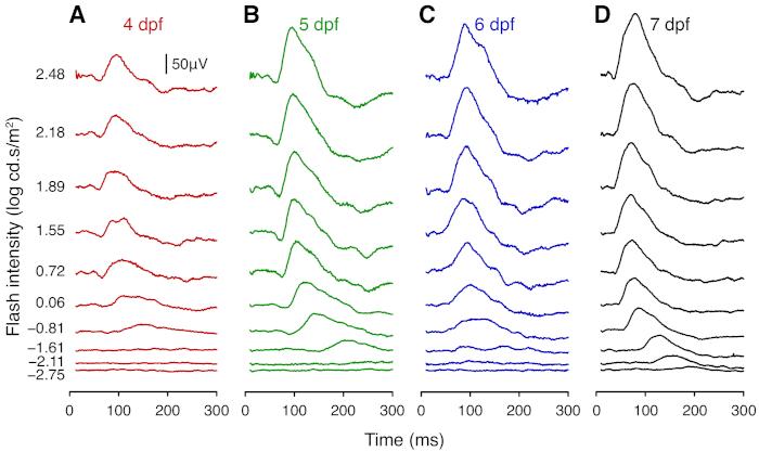 Electroretinogram Recording in Larval Zebrafish using A Novel Cone