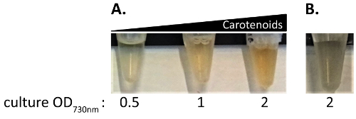 Looking Outwards: Isolation of Cyanobacterial Released