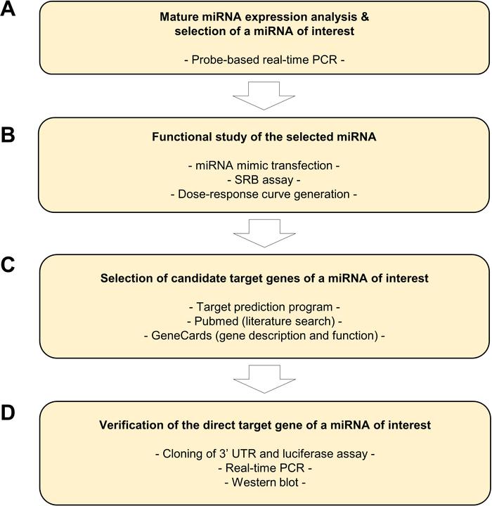 An In Vitro Protocol for Evaluating MicroRNA Levels