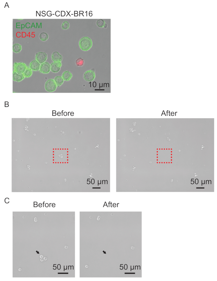 Micromanipulation of Circulating Tumor Cells for Downstream