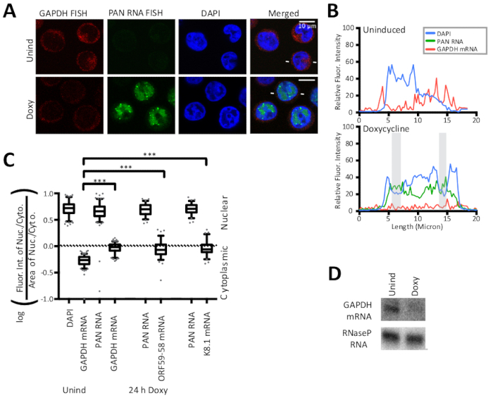 Quantitative Fluorescence In Situ Hybridization (FISH) and