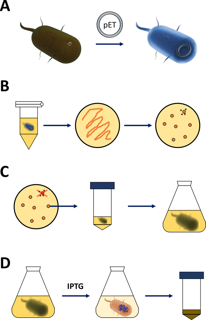 Expression, Purification, Crystallization, and Enzyme Assays