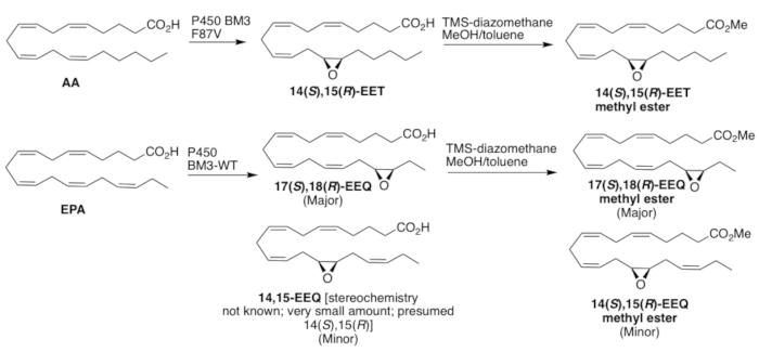 Enzymatic Synthesis of Epoxidized Metabolites of