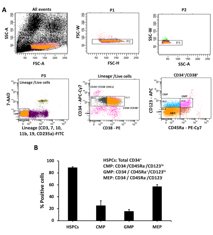 Pan-myeloid Differentiation of Human Cord Blood Derived CD34+