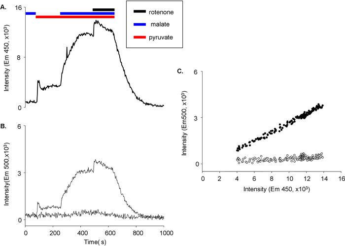 Radioisotop anvendt til dating