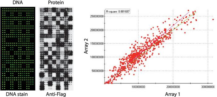 diabetes tipo 2 gráficos de australia lineal