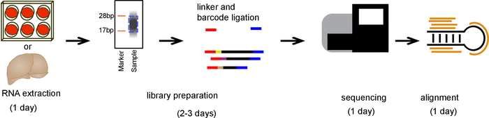 A Complete Pipeline For Isolating And Sequencing Micrornas And