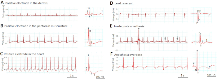 In Vivo Surface Electrocardiography for Adult Zebrafish
