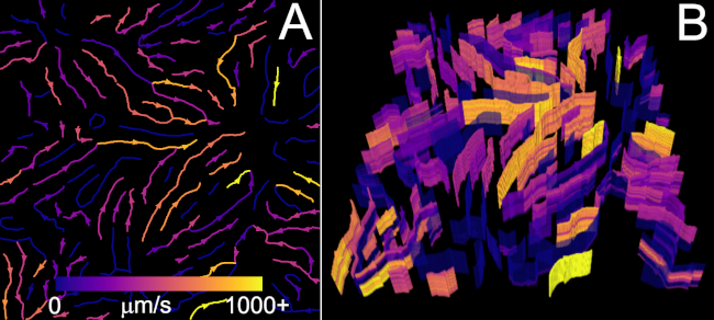 Spatial Temporal Analysis Of Fieldwise Flow In Microvasculature