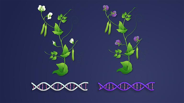 Genetics of Organisms