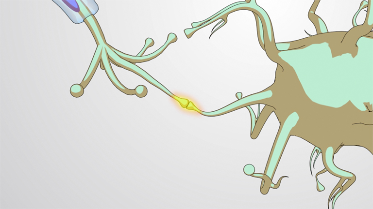 Synaptic Signaling