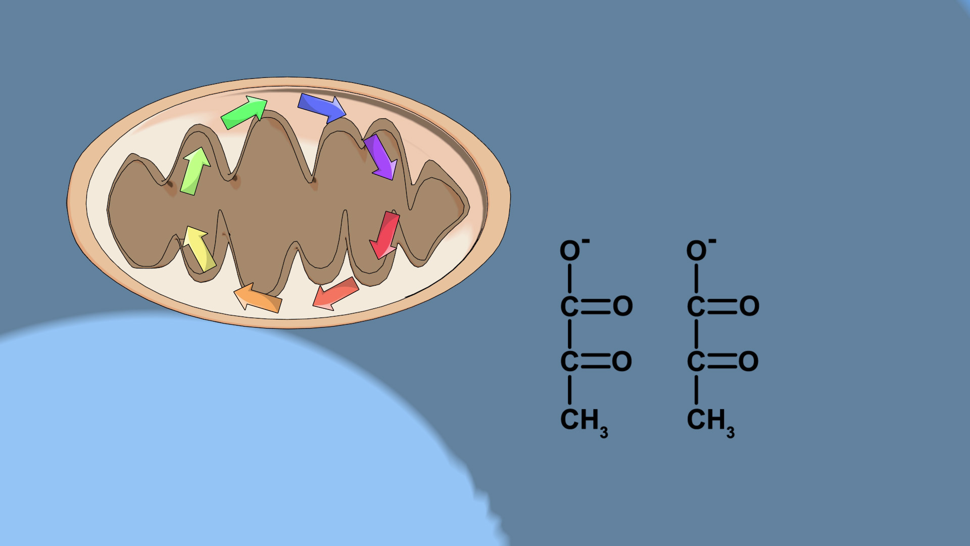 What is Glycolysis?