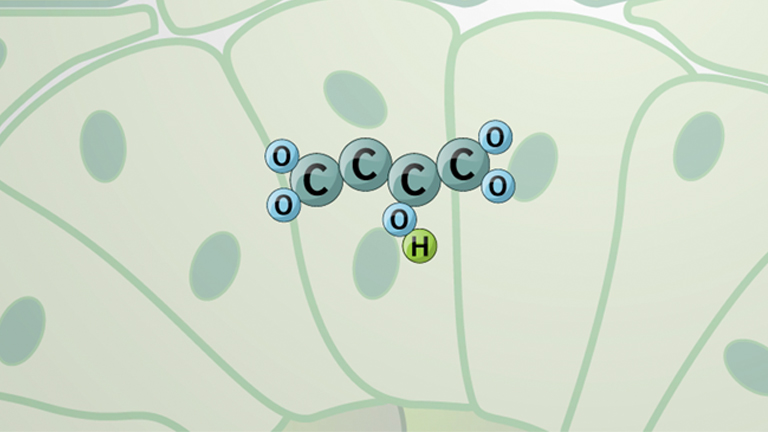 C4 Pathway and CAM