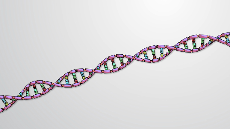 The DNA Helix