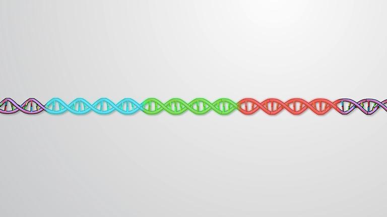 Organization of Genes