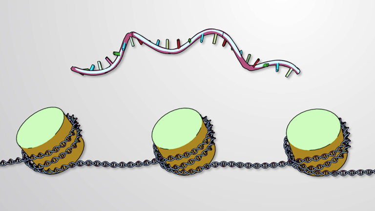 Epigenetic Regulation