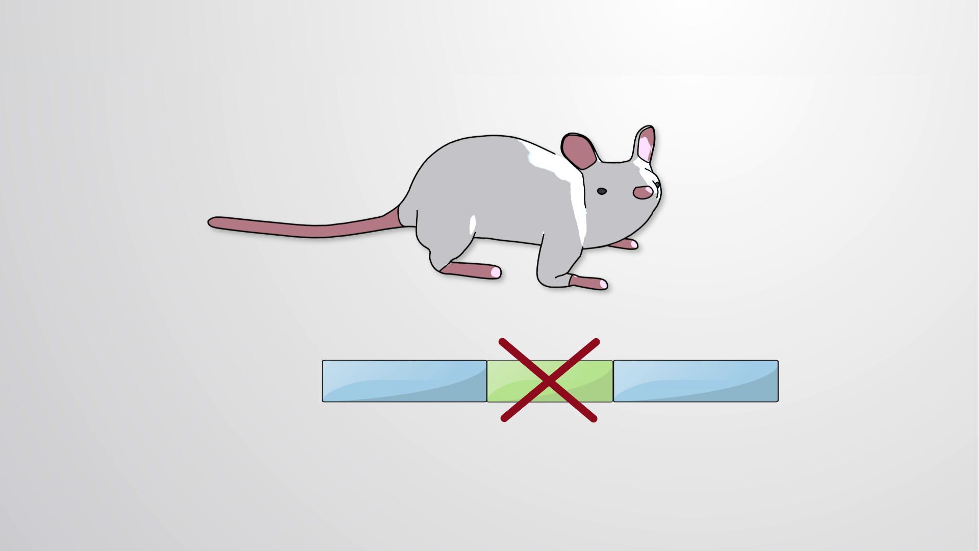 In-vitro Mutagenesis