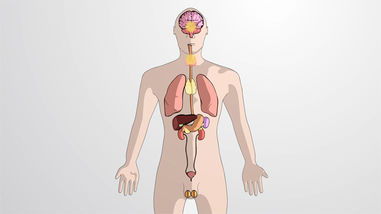 What is the Endocrine System?