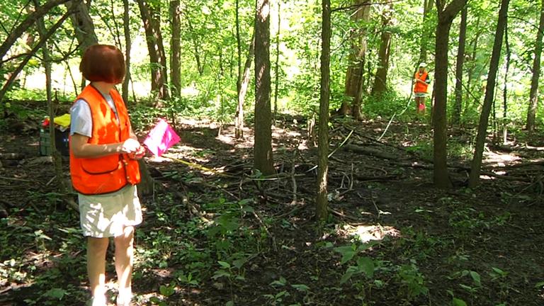 Tree Surveying thumbnail