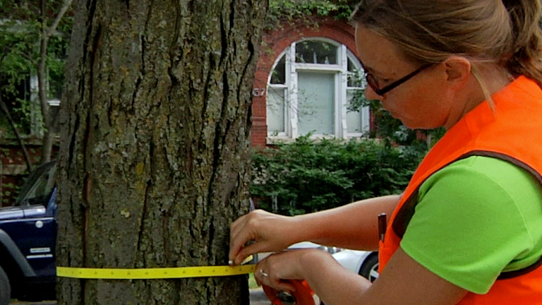 GIS and Urban Forestry thumbnail