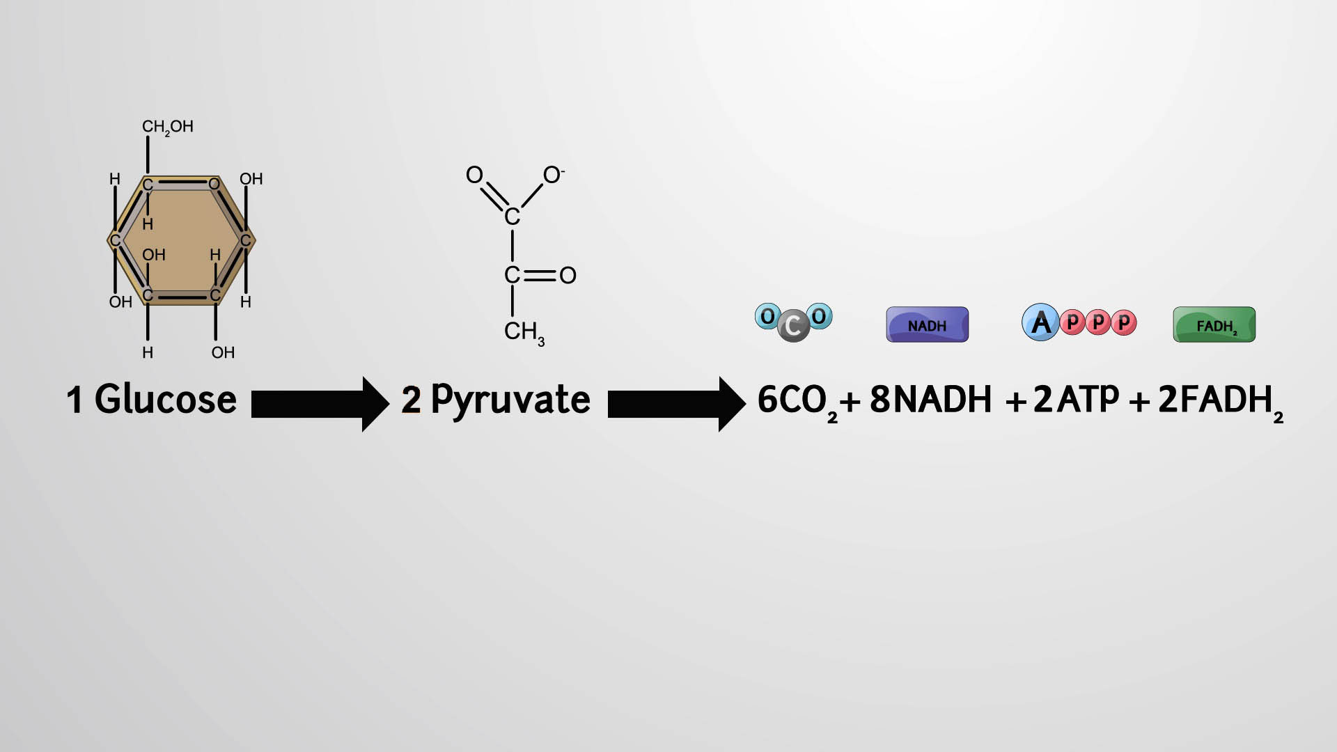 Products of the Citric Acid Cycle