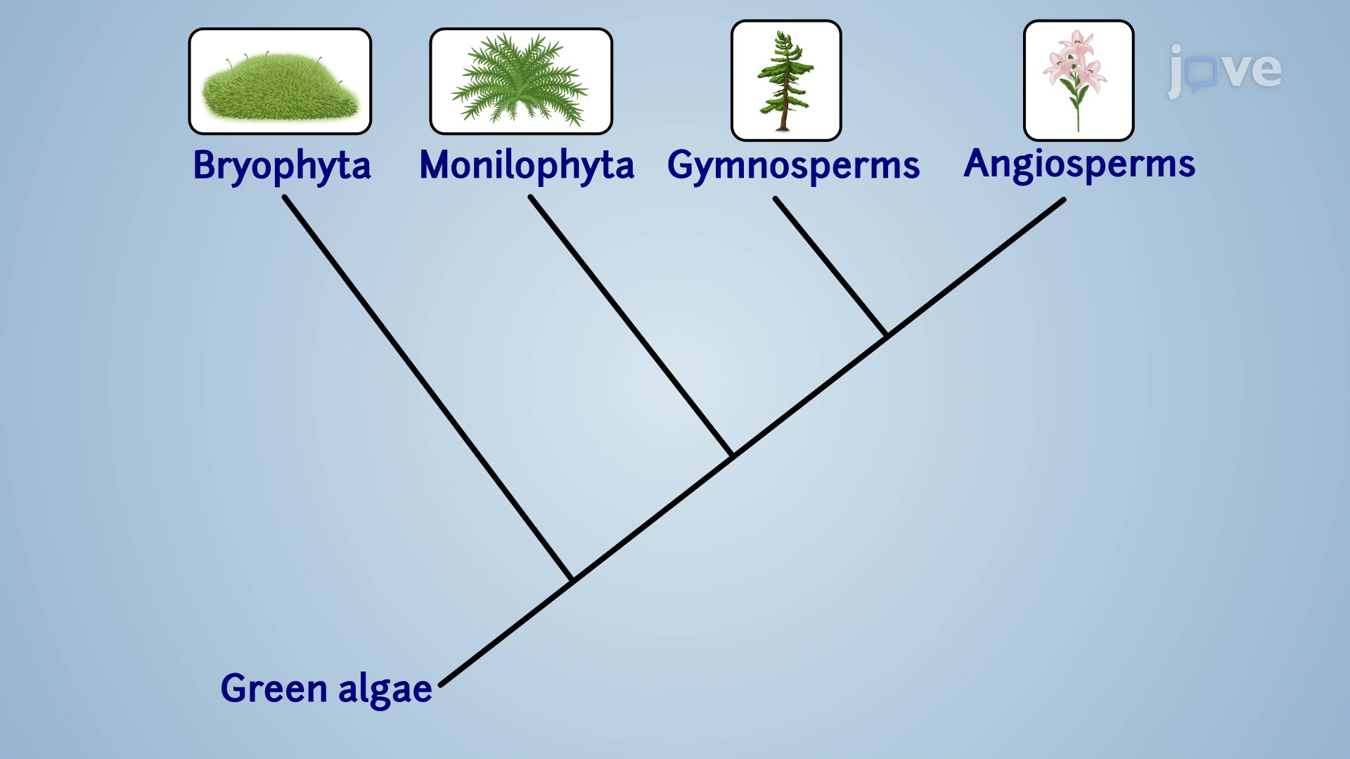 Introduction to Plant Diversity