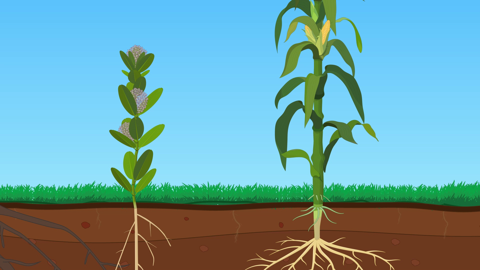 Basic Plant Anatomy: Roots, Stems, and Leaves