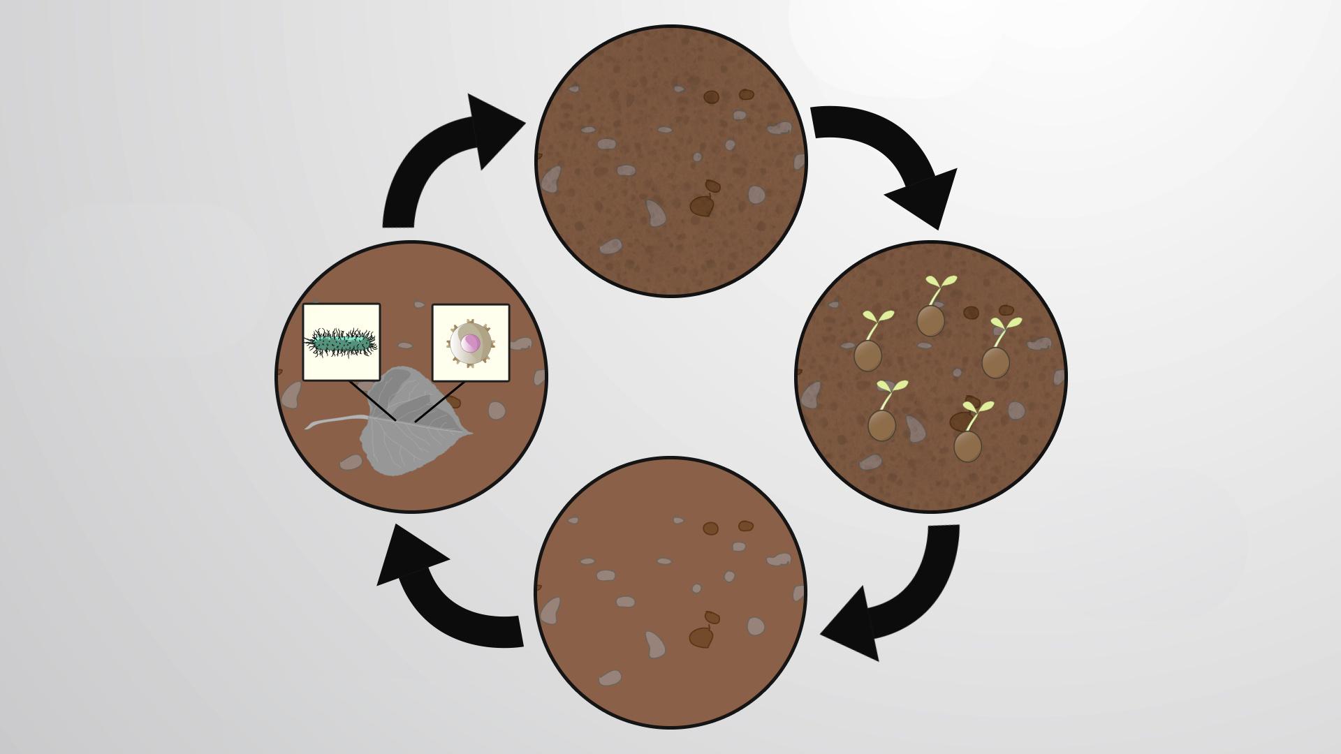 The Soil Ecosystem