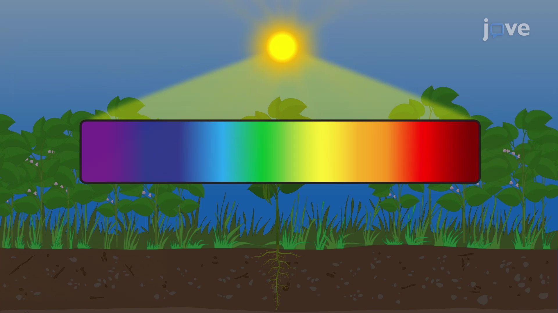 Photoreceptors and Plant Responses to Light
