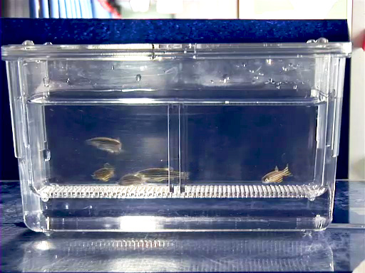 Zebrafish Breeding and Embryo Handling thumbnail
