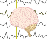 JoVE Science Education > Neuroscience