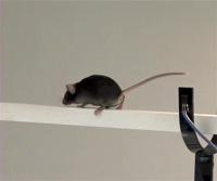 Balance and Coordination Testing thumbnail