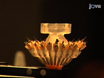 Micro-drive Array for Chronic <em>in vivo</em> Recording: Tetrode Assembly thumbnail