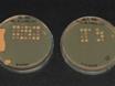 Dissection of <em>Saccharomyces Cerevisiae</em> Asci thumbnail