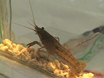 Recordings of Neural Circuit Activation in Freely Behaving Animals thumbnail