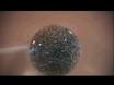 Fattore-Coated crescita Placement Bead su Espianti Forebrain dorsali thumbnail