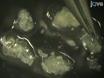の単離と精製<em>ショウジョウバエ</em磁気ビーズソート別>末梢ニューロン thumbnail