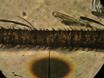 곤충의 단일 Sensillum 레코딩<em> Drosophila melanogaster</em>과<em> 아노 펠 레스 gambiae</em thumbnail