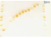 باستخدام نظام التقطير GELFREE 8100 لتقطير الوزن الجزيئي وبناء مع مرحلة الانتعاش السائل thumbnail
