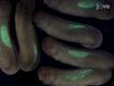 Doku belirlenmesi Hayvan Cap Nakli (ACT) Testi<em> Xenopus laevis</em thumbnail