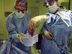 בחינת מנגנוני החיסוני בבסיס דחיית איברים להשתלות thumbnail