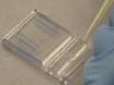 Clonogenic Assay: Adherent Cells thumbnail