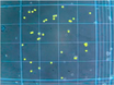 Counting Human Neural Stem Cells thumbnail