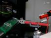 Elektrofysiologi av Scorpion Peg Sensilla thumbnail